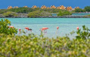 De geschiedenis en de cultuur van Bonaire